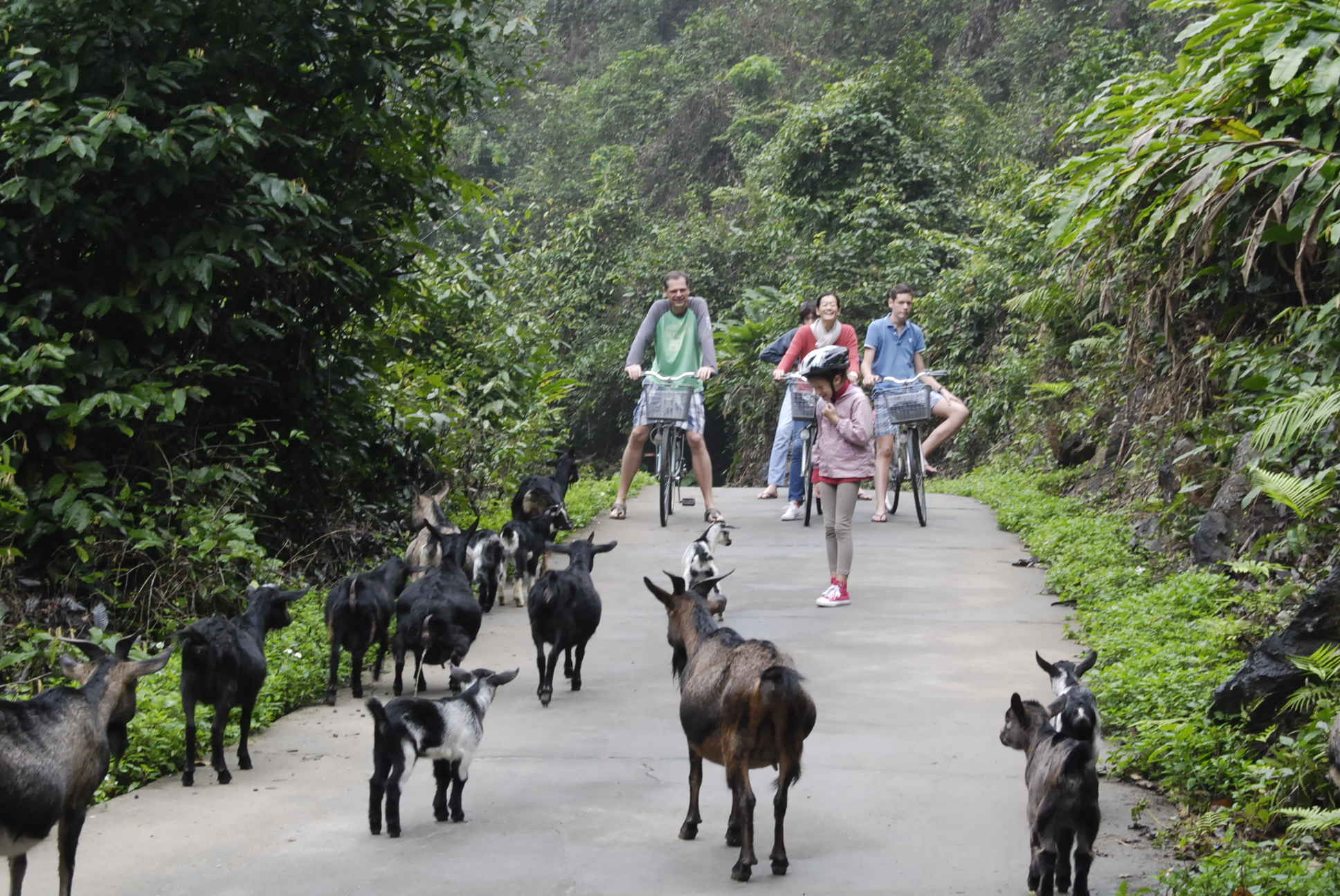 bycicling in viet hai village, things to do in halong bay