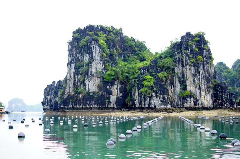 pearl farm in halong bay