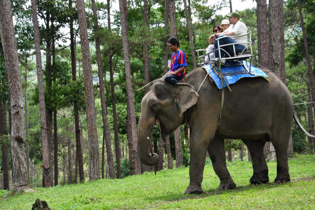 Elephant-riding-in-Dalat