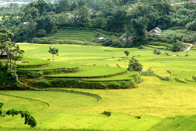 Lai-Chau-rice-field-vietnam-travel-vietnam-tours