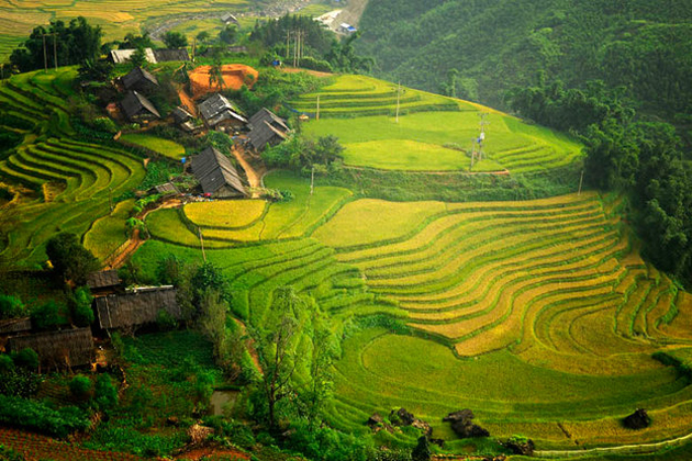 rice field in ta van sapa vietnam