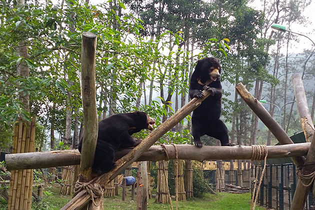 bears in Tam Dao Vietnam, Cozy Vietnam Travel