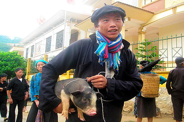 the-Pig-Carried-under-the-Armpit-lai-chau