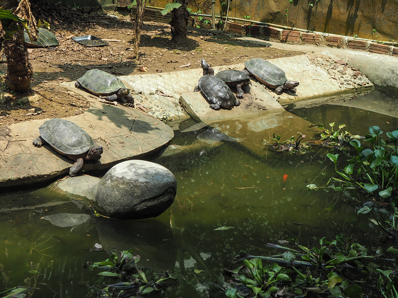 Turtle Conservation Center in Cuc Phuong