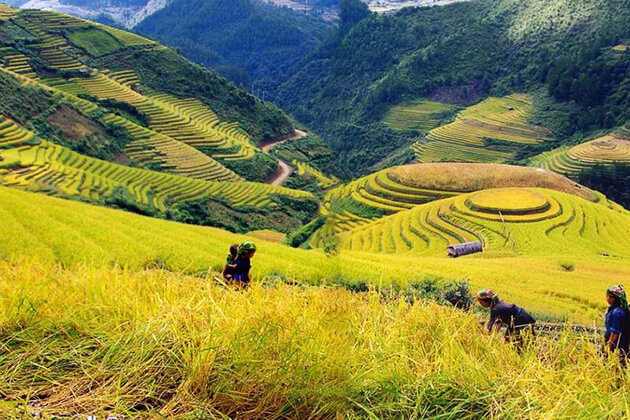 muong-hoa-valley-in-sapa